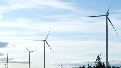 Wind turbines among a forest skyline.